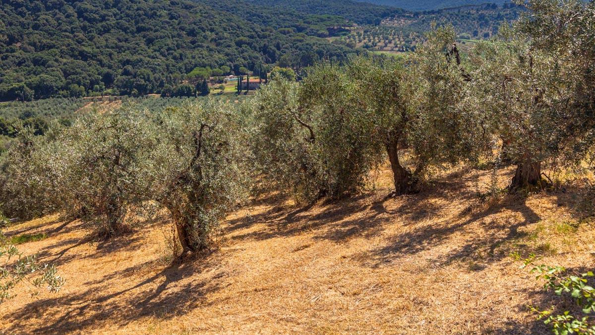 EPOS Olive Yard